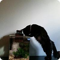 Adopt A Pet :: Mildred - Brooklyn, NY