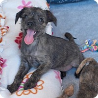 Adopt A Pet :: Rylee - Minneola, FL