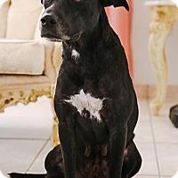 Adopt A Pet :: Greta - New York, NY