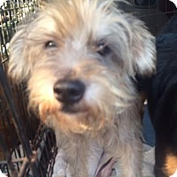 Adopt A Pet :: Friskies Adoption pending - East Hartford, CT