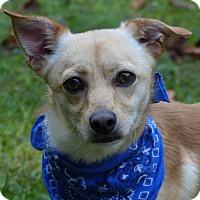 Adopt A Pet :: Tito - Mocksville, NC