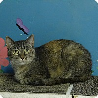 Adopt A Pet :: Pepper - Elyria, OH