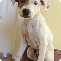 Adopt A Pet :: Kellly - Waldorf, MD