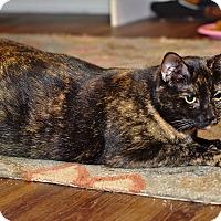 Adopt A Pet :: Maya - Homewood, AL