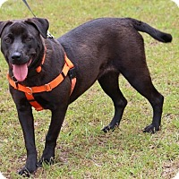 Adopt A Pet :: Lilly Mae-Adoption Pending - Pinehurst, NC
