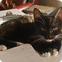 Adopt A Pet :: Boo - Covington, KY