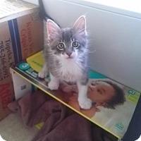 Adopt A Pet :: A378913 Yaps - San Antonio, TX