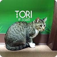 Adopt A Pet :: Tori - Alvin, TX