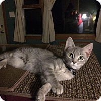 Adopt A Pet :: Boo - Wilmore, KY
