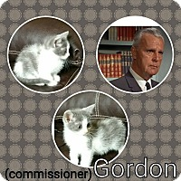 Adopt A Pet :: Commissioner Gordon - joliet, IL