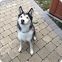 Adopt A Pet :: Whiskey - Keswick, ON