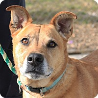 Shepherd (Unknown Type) Mix Dog for adoption in Martinsville, Indiana - Lola