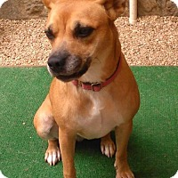 Chihuahua/Carolina Dog Mix Dog for adoption in Decatur, Georgia - Sandy
