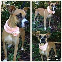 Boxer Mix Dog for adoption in Lexington, North Carolina - Sadie