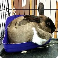 Adopt A Pet :: Daphne - Chippewa Falls, WI