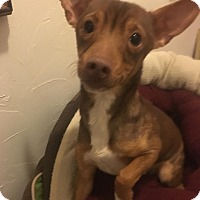 Adopt A Pet :: Amparo: Adoption Pending - Verona, NJ