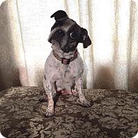 Adopt A Pet :: Noel - Alden, NY