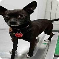 Adopt A Pet :: SONY - Peoria, IL