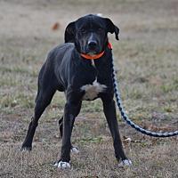 Adopt A Pet :: Hondo - Lebanon, MO