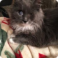 Adopt A Pet :: Cherri DUO ONLY - Mount Laurel, NJ