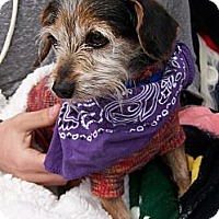 Adopt A Pet :: Hercules - San Angelo, TX