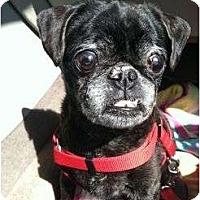 Adopt A Pet :: Mia - Poway, CA