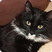 Adopt A Pet :: Donny (LE) - Little Falls, NJ