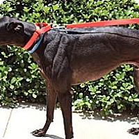 Adopt A Pet :: Rowdy Rango