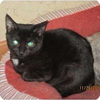 Adopt A Pet :: Bree - Sterling Hgts, MI