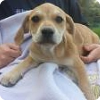 Adopt A Pet :: Baby Floyd - Marlton, NJ