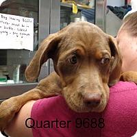 Adopt A Pet :: Quater - baltimore, MD