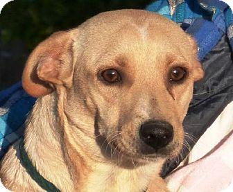 Labrador Retriever/Terrier (Unknown Type, Medium) Mix Dog for adoption in Slidell, Louisiana - Jenny