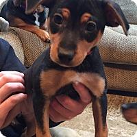 Adopt A Pet :: Tia - Sparta, NJ