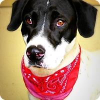 Adopt A Pet :: Ziggy - Casa Grande, AZ