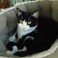 Adopt A Pet :: Pong - Dale City, VA