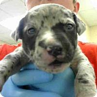Adopt A Pet :: A273084 - Conroe, TX