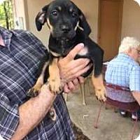 Adopt A Pet :: GB_Elvis - E. Greenwhich, RI