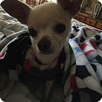 Adopt A Pet :: Maggie May formerly Maggie Sue - Las Vegas, NV