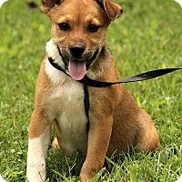 Adopt A Pet :: Lizzy - Allentown, PA