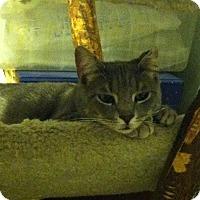Adopt A Pet :: Crimpet - Philadelphia, PA