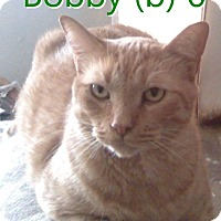 Adopt A Pet :: Bobby - North Branch, MI