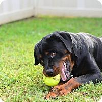 Adopt A Pet :: Biggee - Frederick, PA