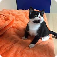 Adopt A Pet :: Keanu (Has Application) - Washington, DC