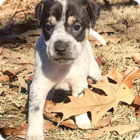 Adopt A Pet :: Ezra - Charlotte, NC