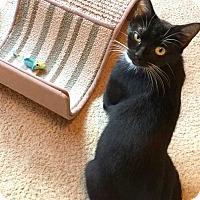Adopt A Pet :: GIGI - Mooresville, NC