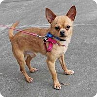 Adopt A Pet :: SATCHEL - San Francisco, CA
