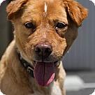 Adopt A Pet :: Star