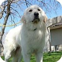 Adopt A Pet :: Mikko - Austin, TX