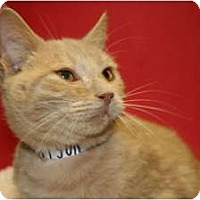 Adopt A Pet :: TOBY - SILVER SPRING, MD