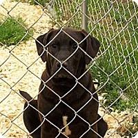 Adopt A Pet :: Maizey - Paintsville, KY